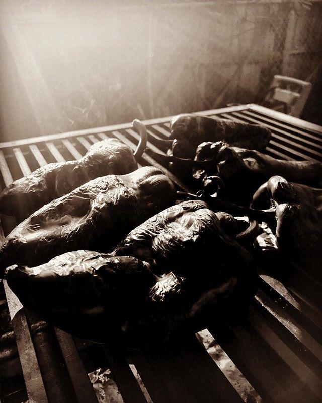 ...late afternoon sunlight, roasting Chiles Poblanos #fire #roasting #fireroasted #chiles #chile #poblano #asasdo para #rajas con #elote y #crema #tortillas #organicas #organic #locallymade in #eastla #eastlosangeles
