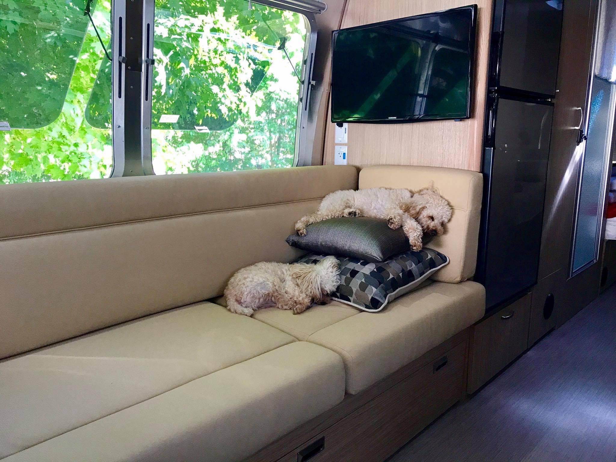 Dixie Pups Before.jpg