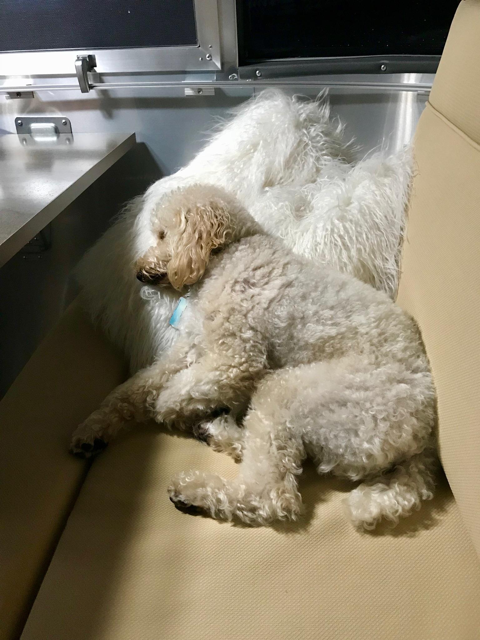 Dixie Sleeping Pup.jpg