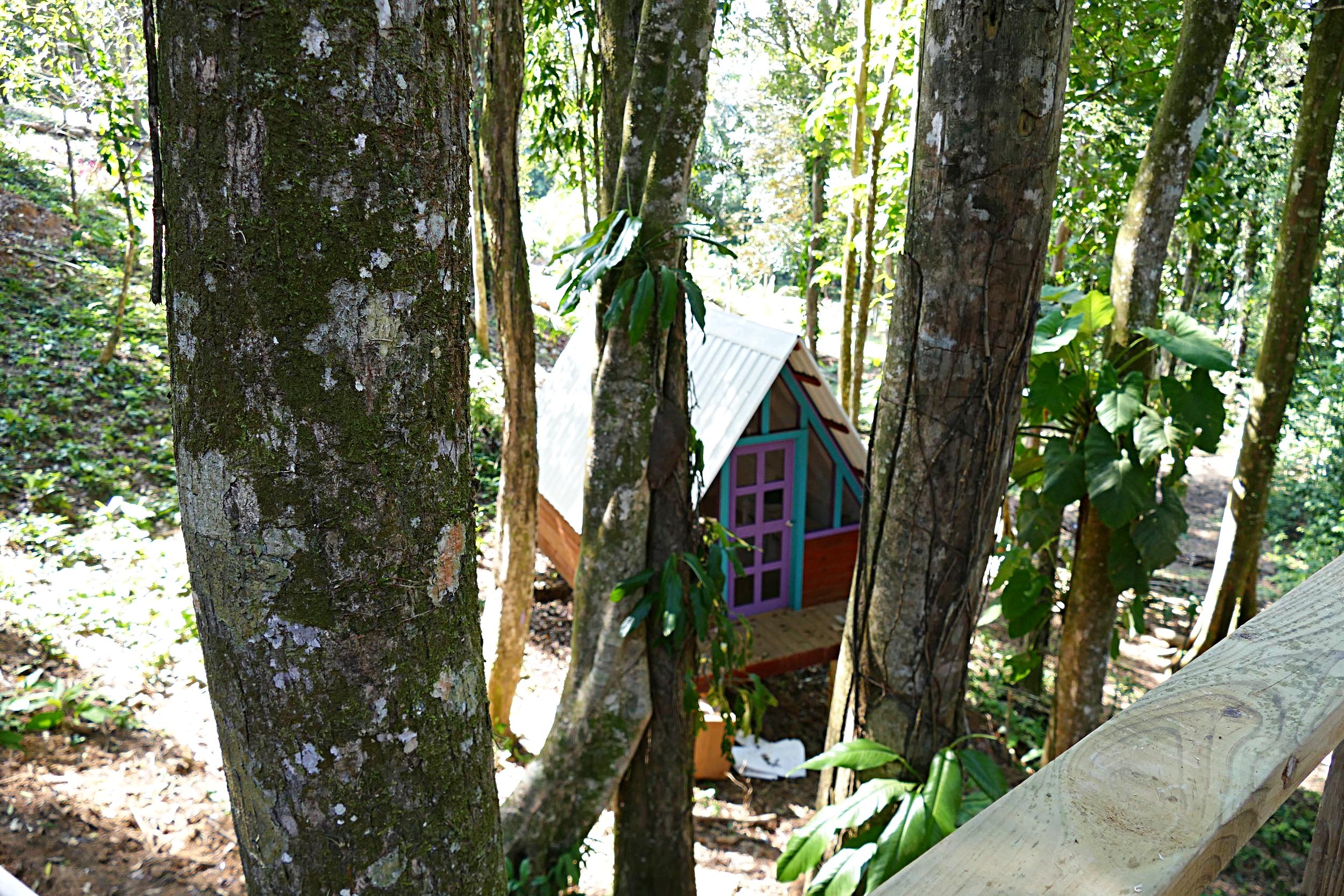 Panama-NomadTreeLodge (4).jpg