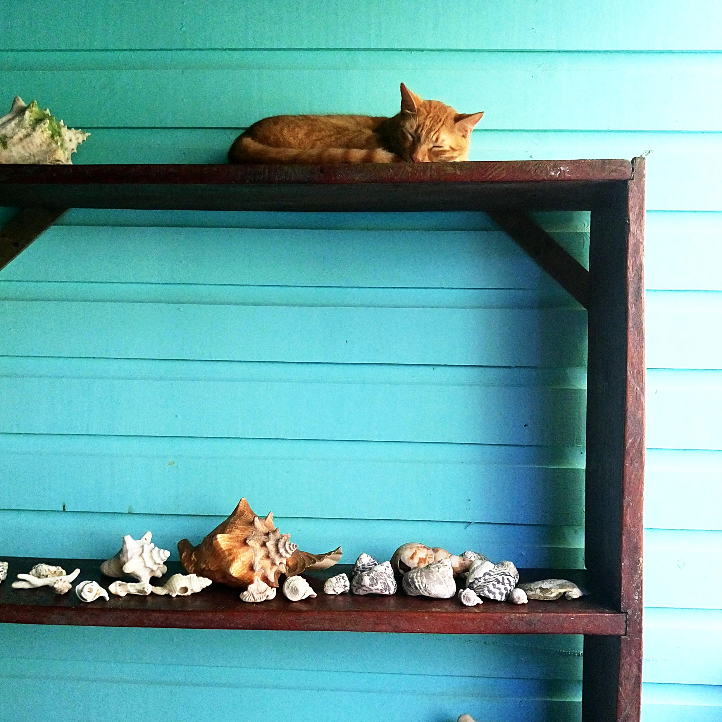 - Coquillages, bois, petit chat et bleu des îles ... Le combo parfait !!! Take me back ..!