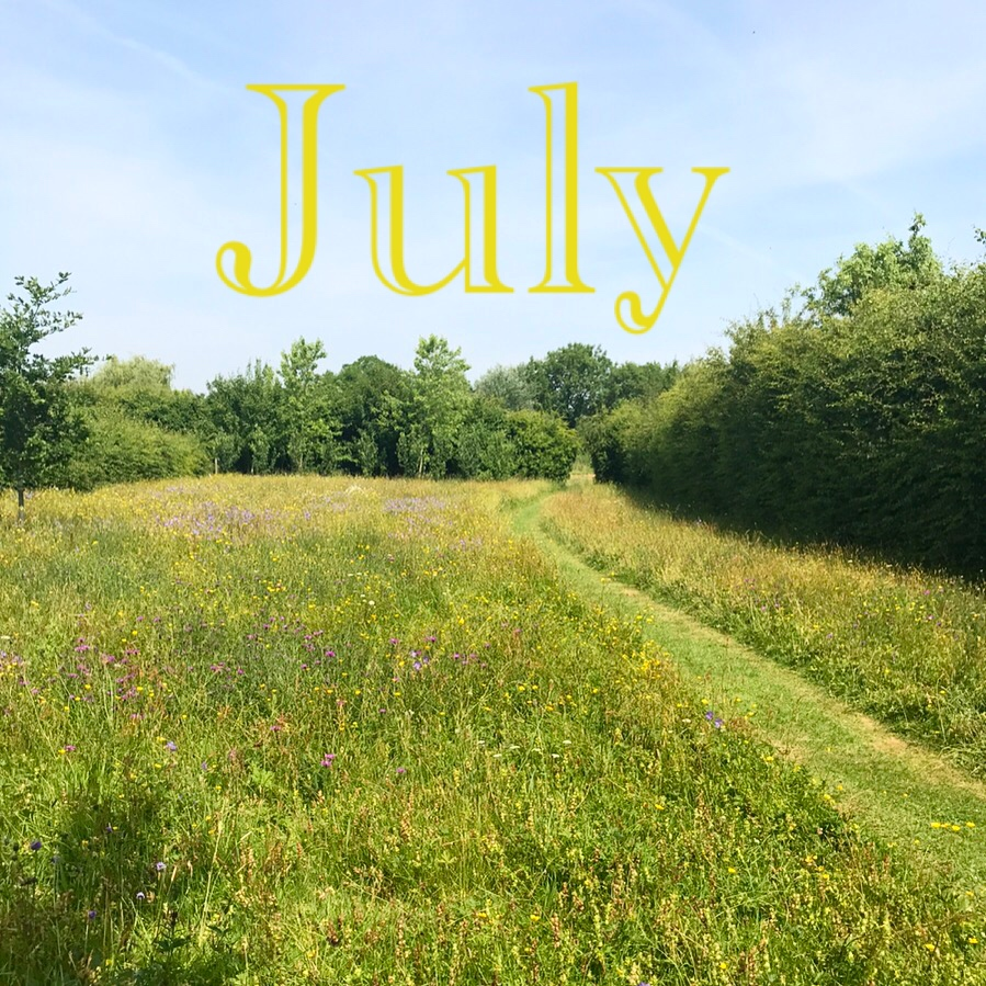 Ode to the wild flower meadow.  Flowers By Daisy  newsletter, July 2017.