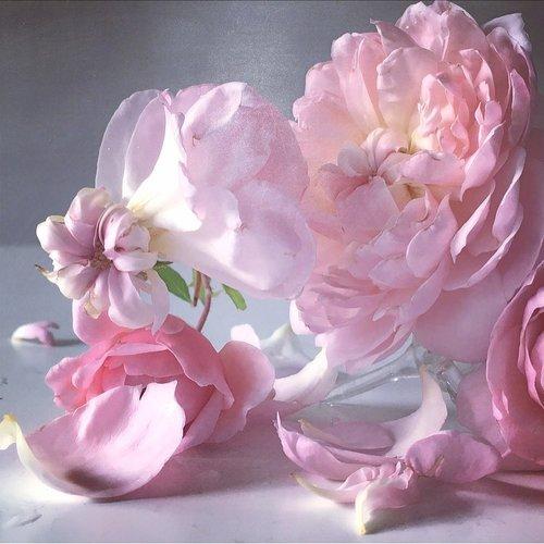 Nick Knight's Roses,  A Little Bird , June 2019