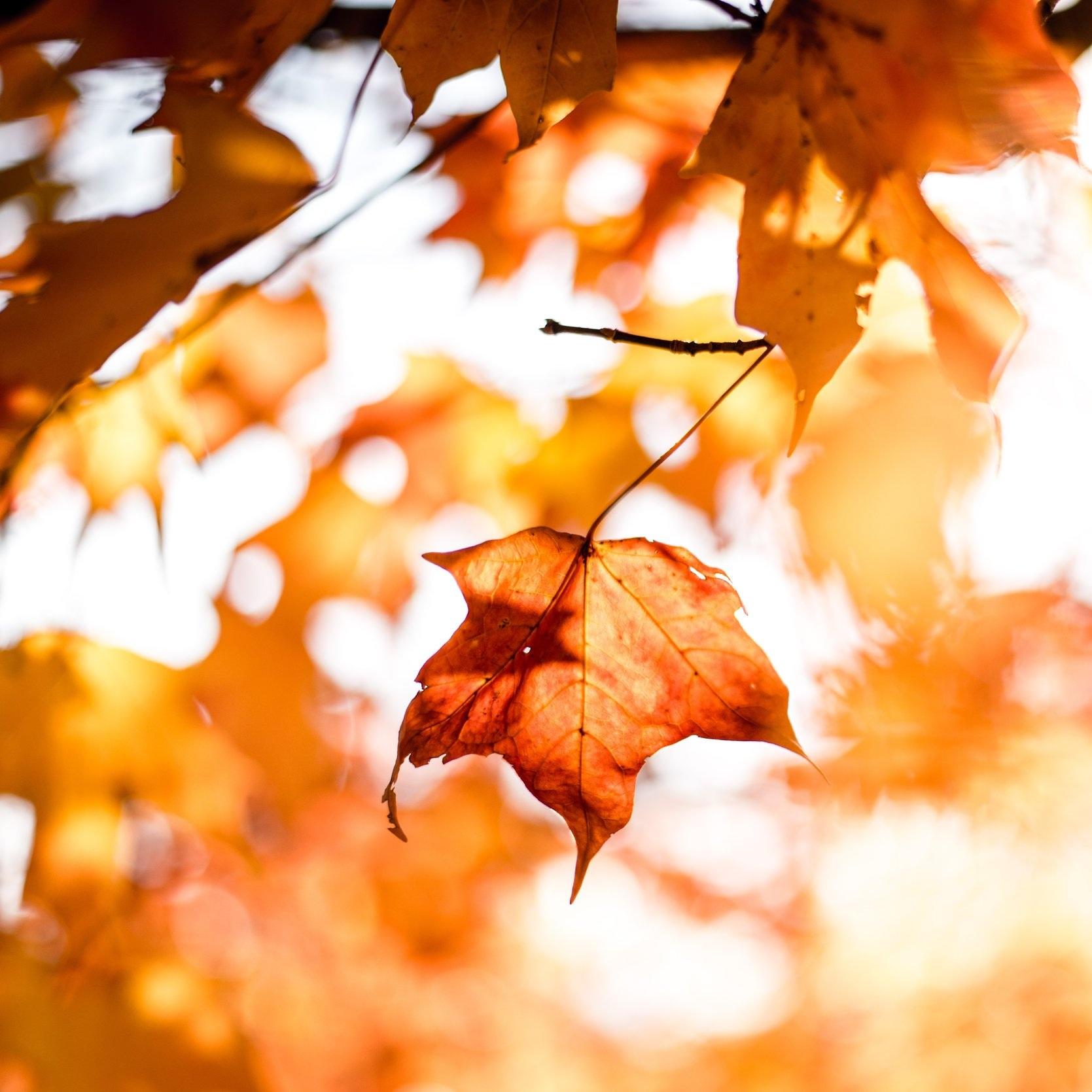 Tør du give slip? Brug efterårets visdom til at skabe balance i dit liv