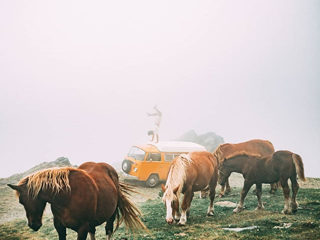 When we thought the fog was already magical some wild horses from the pyrenees started to approch us and we were able to share a very special moment with them. Nomad experiences are the best, the days seem way longer and it's funny how without connection you find real connections. • • • #volkswagen #combi #kombi #t2 #vw #roadtrip #camprodon #pirineo #pirineus #pyrenees #furgo #vanlife #horses #wild #wanderlust #sony #a7sii #travel #wanderlust #tropiclusters @tropicfeelcom