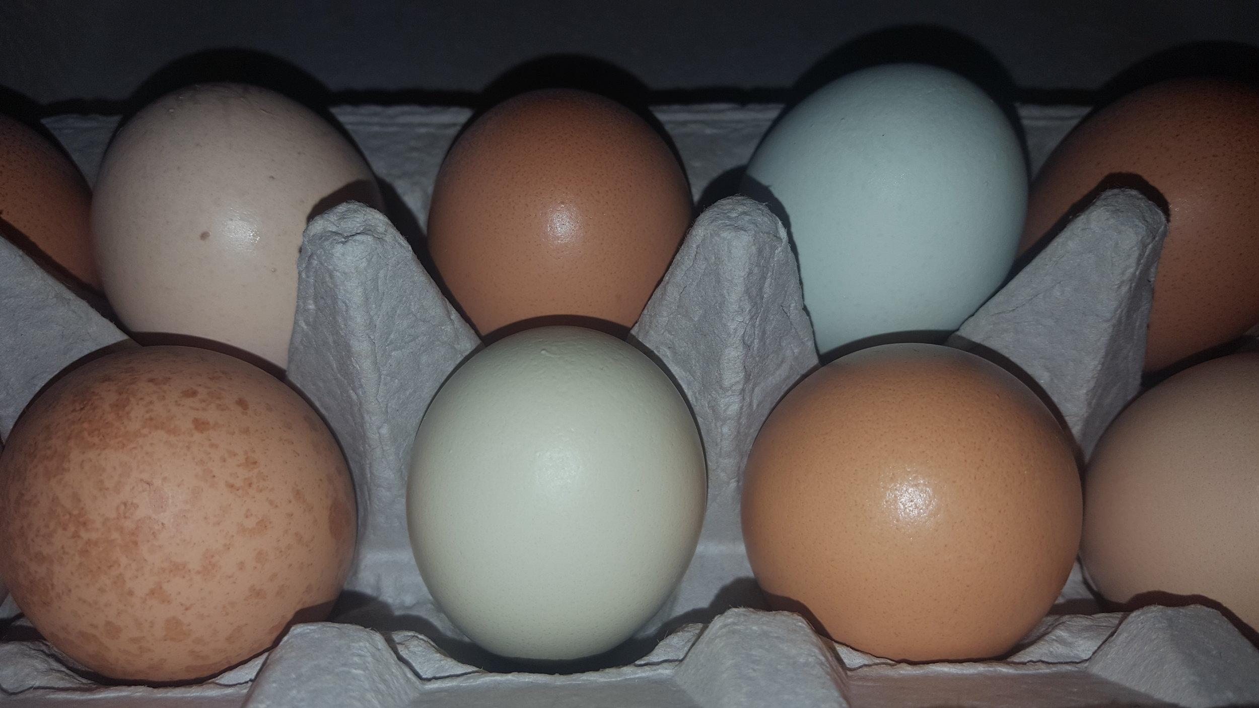 eggs6.jpg