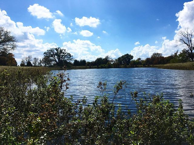 """""""Happy place"""" at the water • There's a old tree that has an opening facing this pond. Inside, inhabits the tiniest, most productive workers at the ranch. 🐝 🐝 🐝 Many bee colonies are being threatened by harmful sprays, which is one of many reasons we don't spray #savethebees  #grassfedbeef #pastured"""