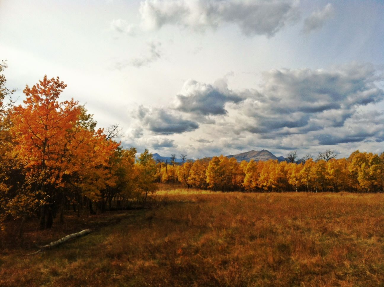 Fall near Babb