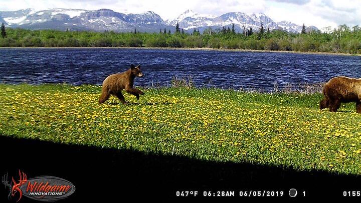 Near Babb Bear