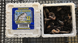 J&W Seafood —Live and Frozen Bait Selections