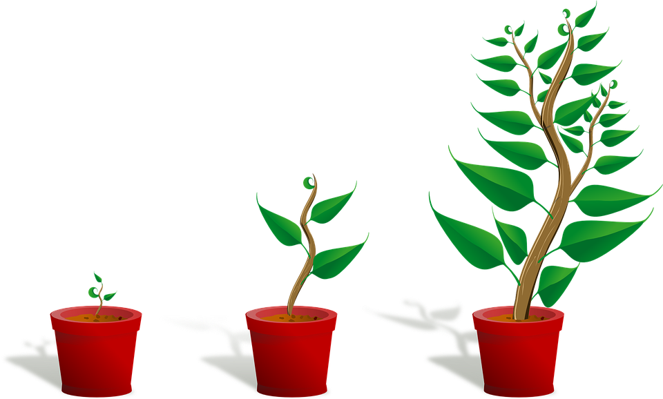 HELP GROW ORGANISATIONS - Supported & Scaled Group to Take on £1m Funding