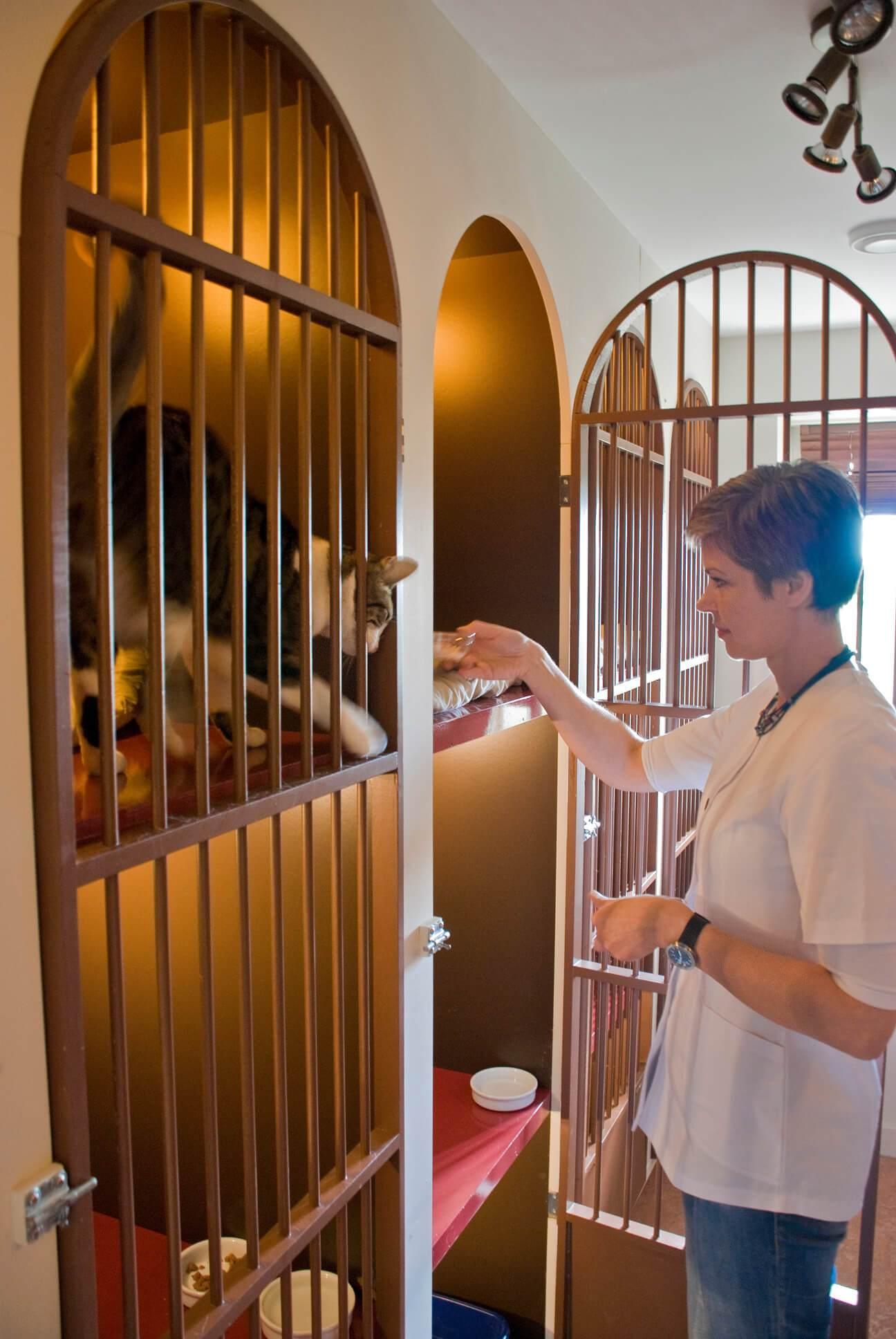 Katnapolsky kattenhotel iedere kat een eigen suite