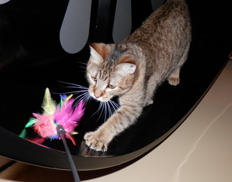Katnapolsky_kattenpension_beschikt_over_een_katten_2.jpg