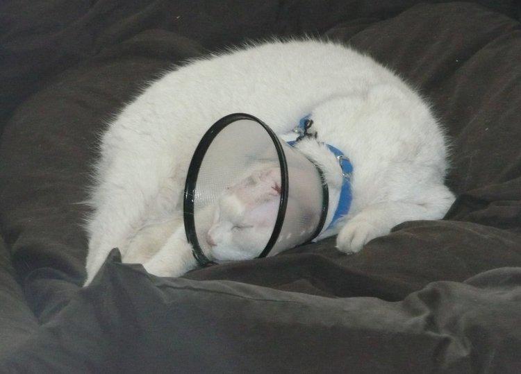 Siep in de dagen na de operatie. Het gaat goed in zijn privékamer.