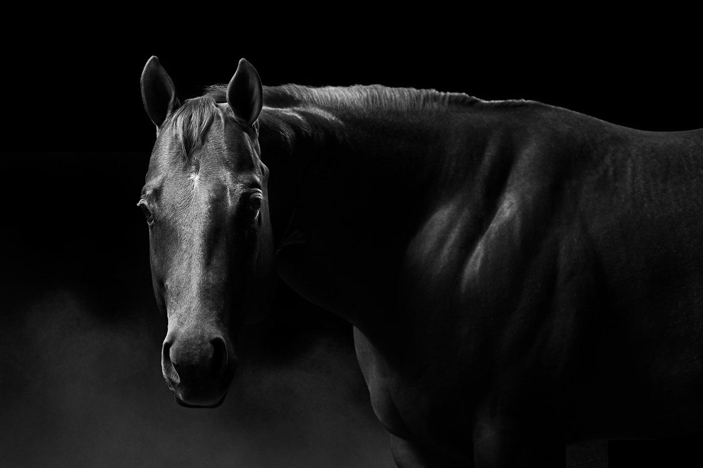 2016_02_29_AWS_SHS_Merrill_Horse-2_0120sm-copy.jpg