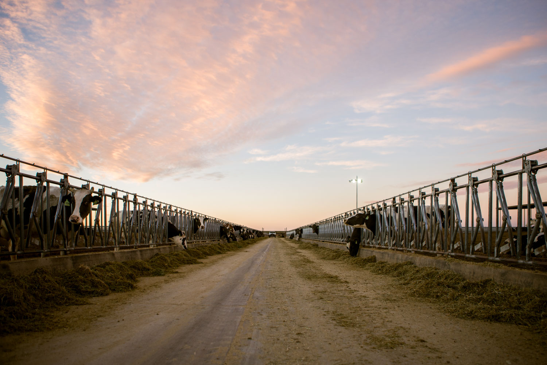 awstudio_cargill_agriculture_04.jpg