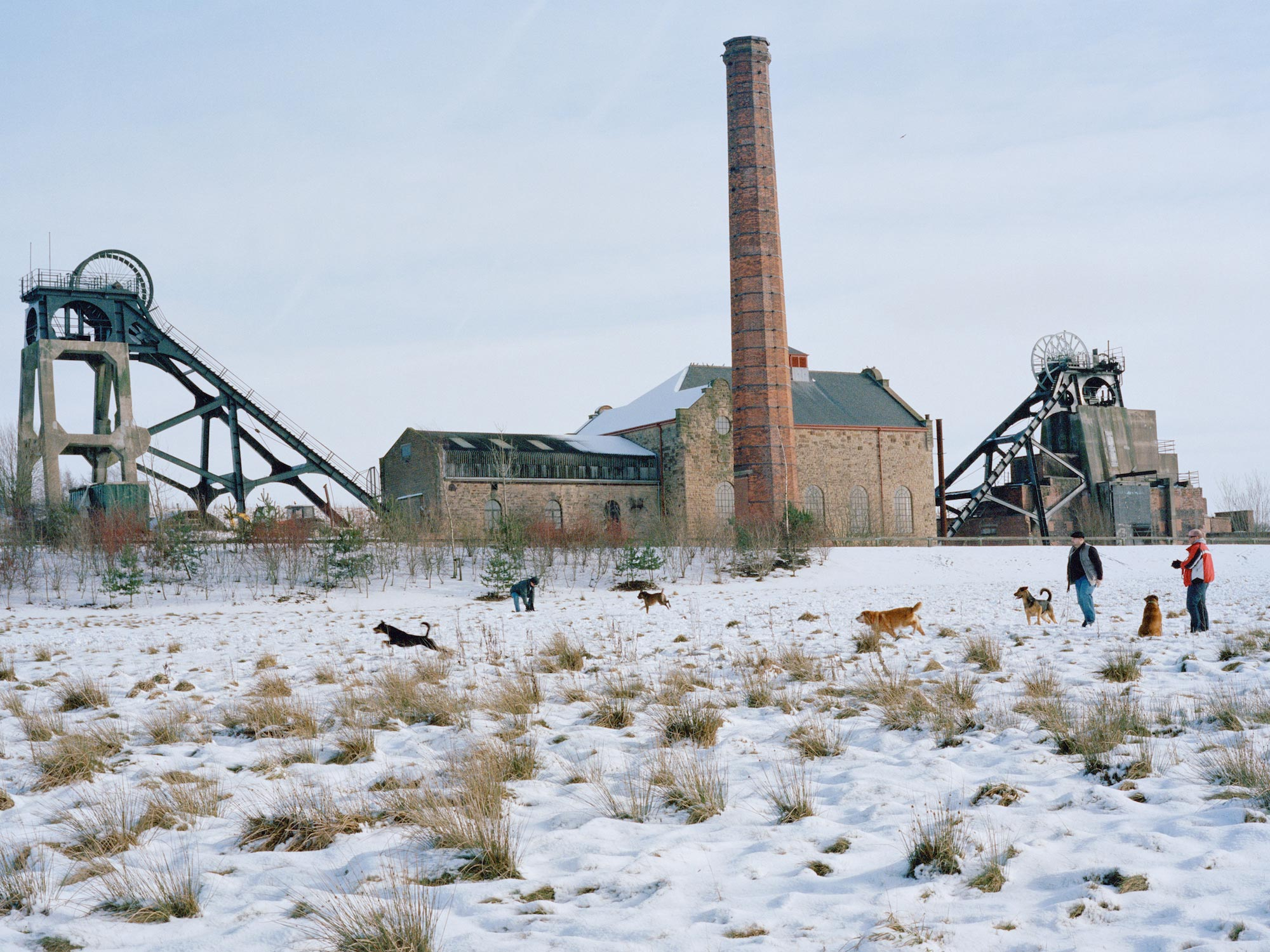 Dogs and their owners playing in the snow, former Pleasley Colliery site.
