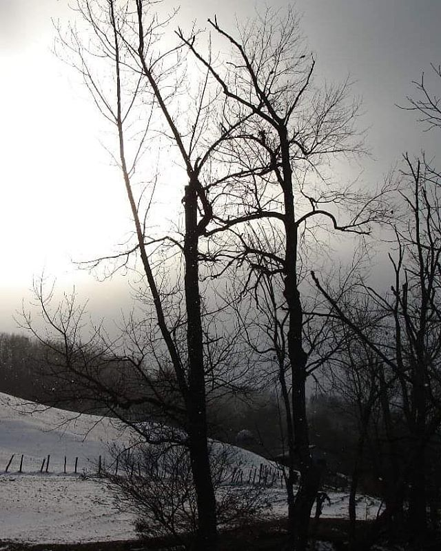 """""""Snow was falling,  so much like stars  filling the dark trees  that one could easily imagine  its reason for being was nothing more  than prettiness."""" ― Mary Oliver . . . . .  #RealEstateAsheville #AshevilleNorthCarolina #AshevilleNC #WNCMountains #MountainAcreage #LandExpert #MountainViews #LandForSale #Realtor #Realty #LandSpecialist #YanceyCounty #MarshallNC #828IsGreat #LookingForAHome #Weaverville #Burnsville #AVL #AVLdo #Realty #AshevilleListings #AVLbiz #MountainHome"""