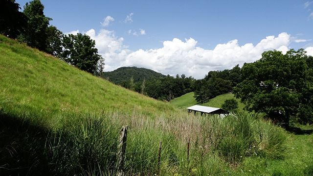 """LISTING FEATURE!  Angel Road - 48 acres  PRIVACY & VIEWS! 30 minutes north of Asheville (7 minutes to I-26). Secluded upland cove-farm, owner is selling off his """"back 48"""" acres with private right of way, wonderful layered mountain views, a mix of open rolling land and hardwood forest, with headwater springs. Deep cove privacy with mountain panoramas.  Call us today or visit our website (link in profile) for more information on this and other listings . . . . . #RealEstateAsheville #AshevilleNorthCarolina #AshevilleNC #WNC #WNCMountains #MountainAcreage #MountainAcreageOfWNC #LandExpert #MountainView #LandForSale #Realtor #Realty #LandSpecialist #YanceyCounty #MarshallNC #BuncombeCounty #MadisonCounty #828IsGreat #LookingForAHome #WeavervilleNC #BurnsvilleNC #AVL #AshevilleListings #AVLbiz #MountainHome"""