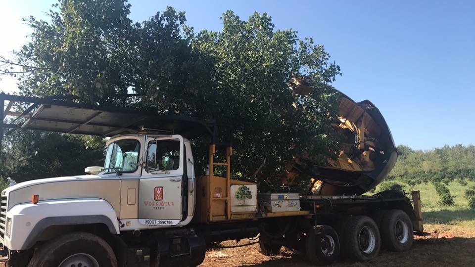 Tree Transplanting 2.JPG