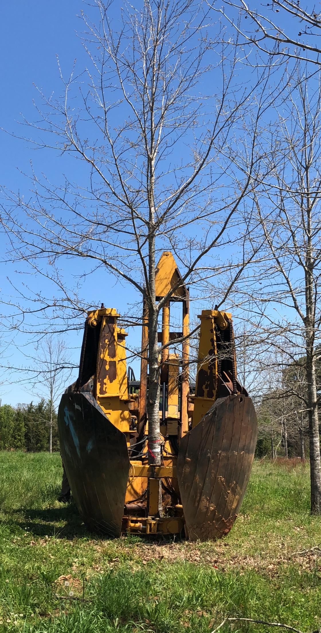 Tree Transplanting 5.JPG