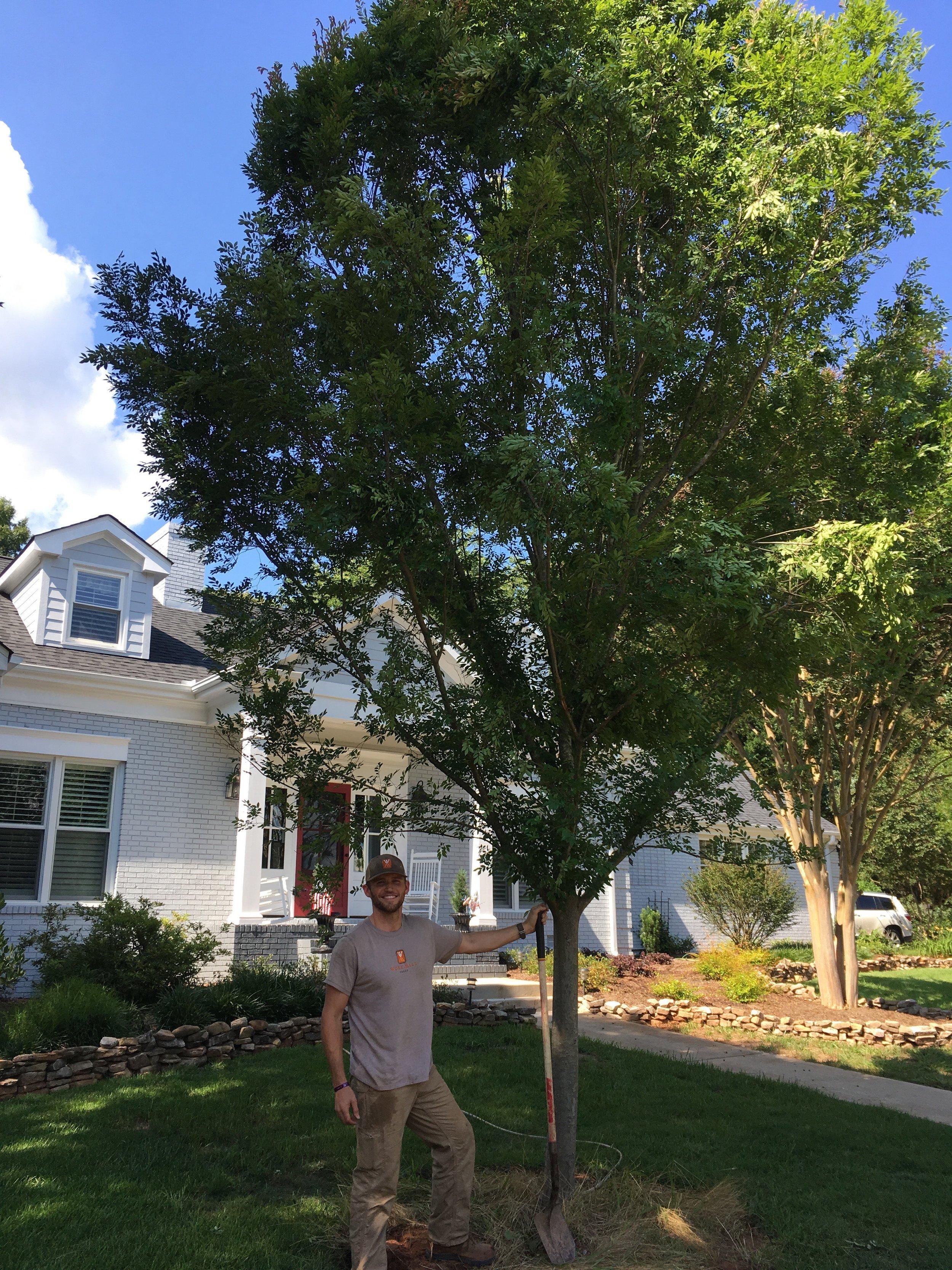 Tree Transplanting 3.jpeg