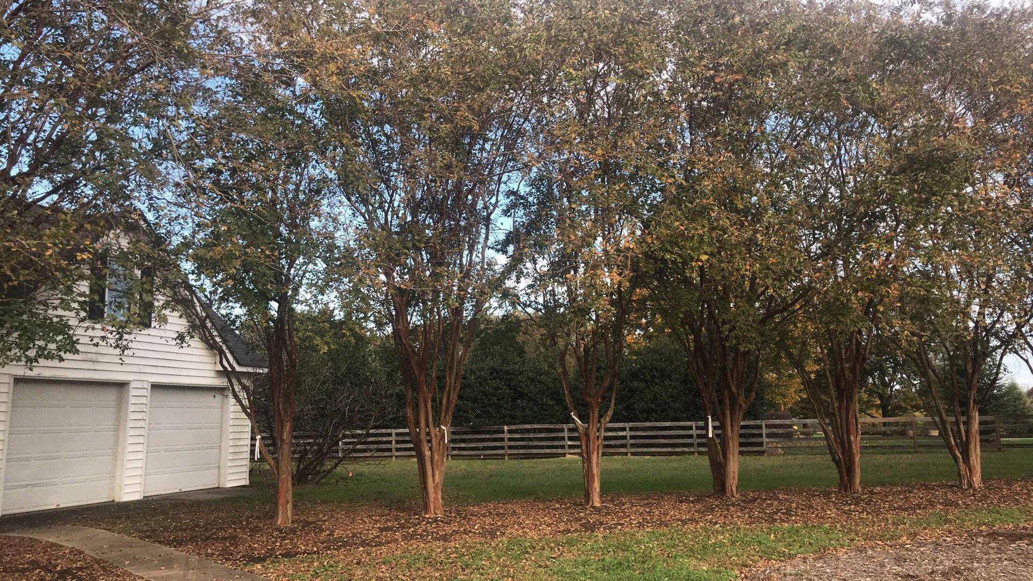 Tree Transplanting 6.jpg