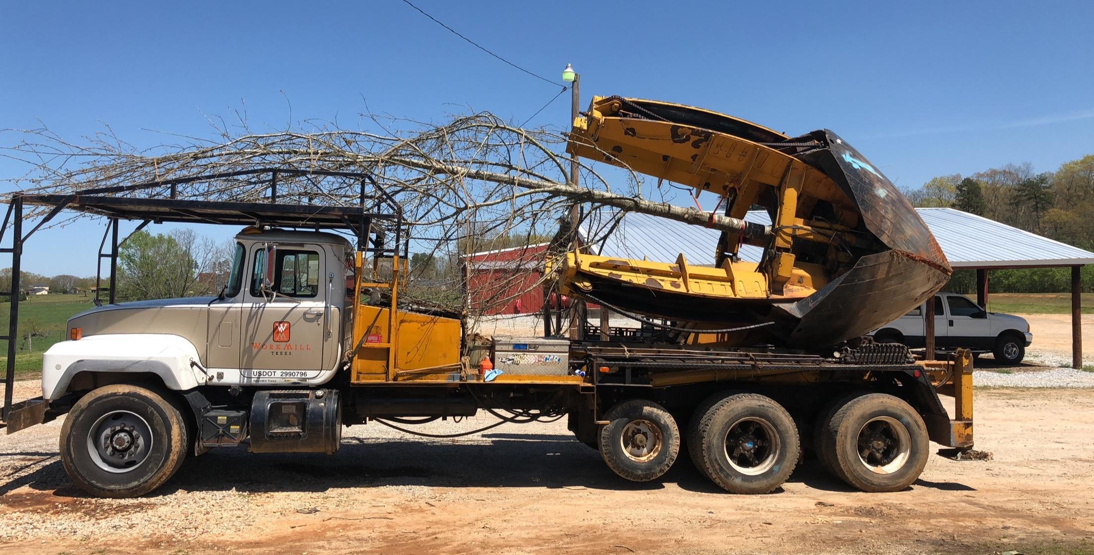 Tree Transplanting 7.JPG