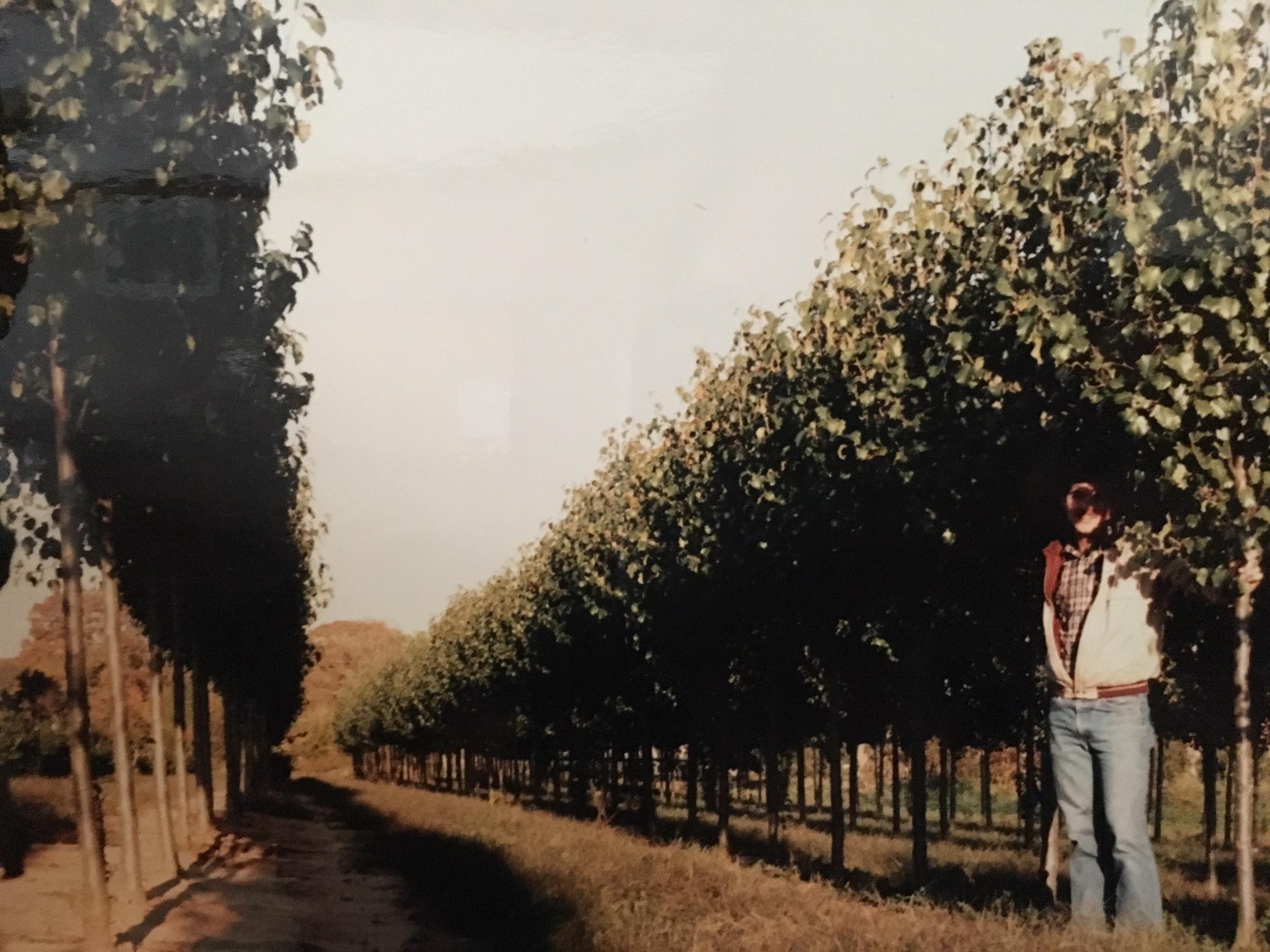Tree Farm Rows.jpg