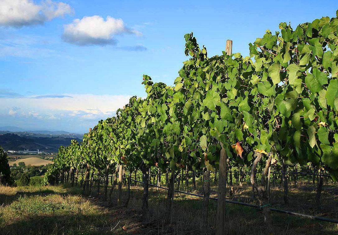 Okanagan Wine Country Travel Insurance.jpg
