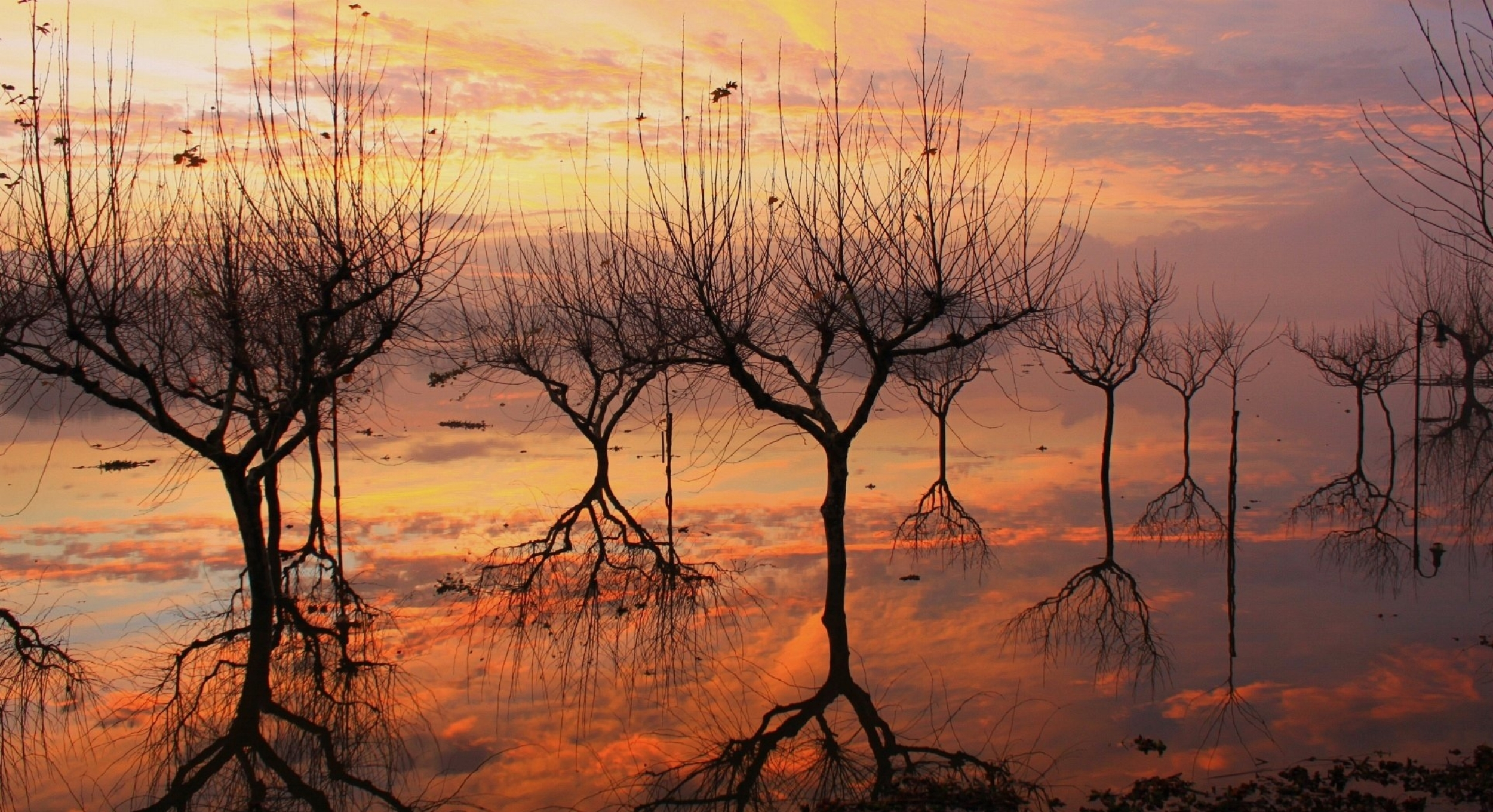 wallpaper-water-trees-mirror-1920-x-1080-full-hd.jpg