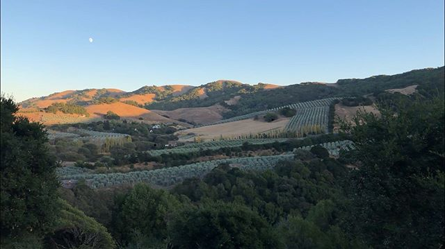 When the golden light was just leaving the vineyards, the colors were so beautiful. . . . #painterly #petaluma #california #coastal #hills