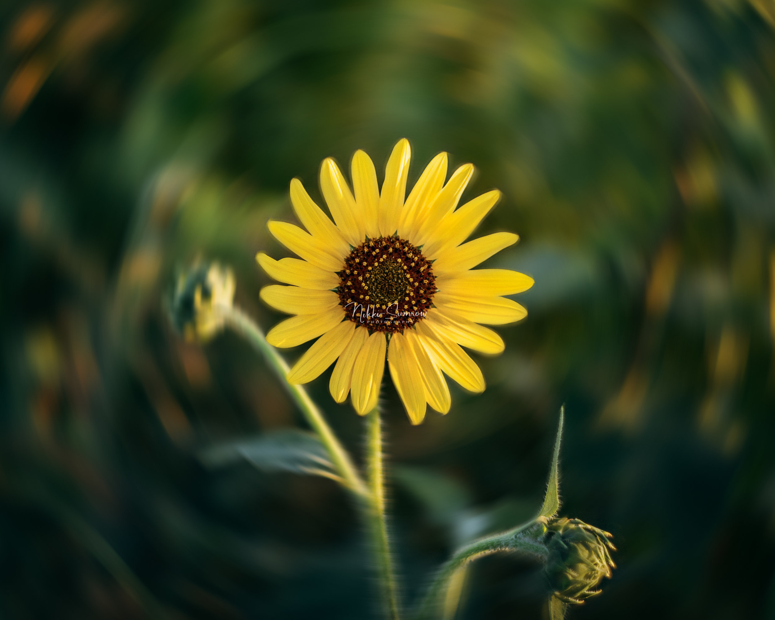 sunflowerspin_web.jpg