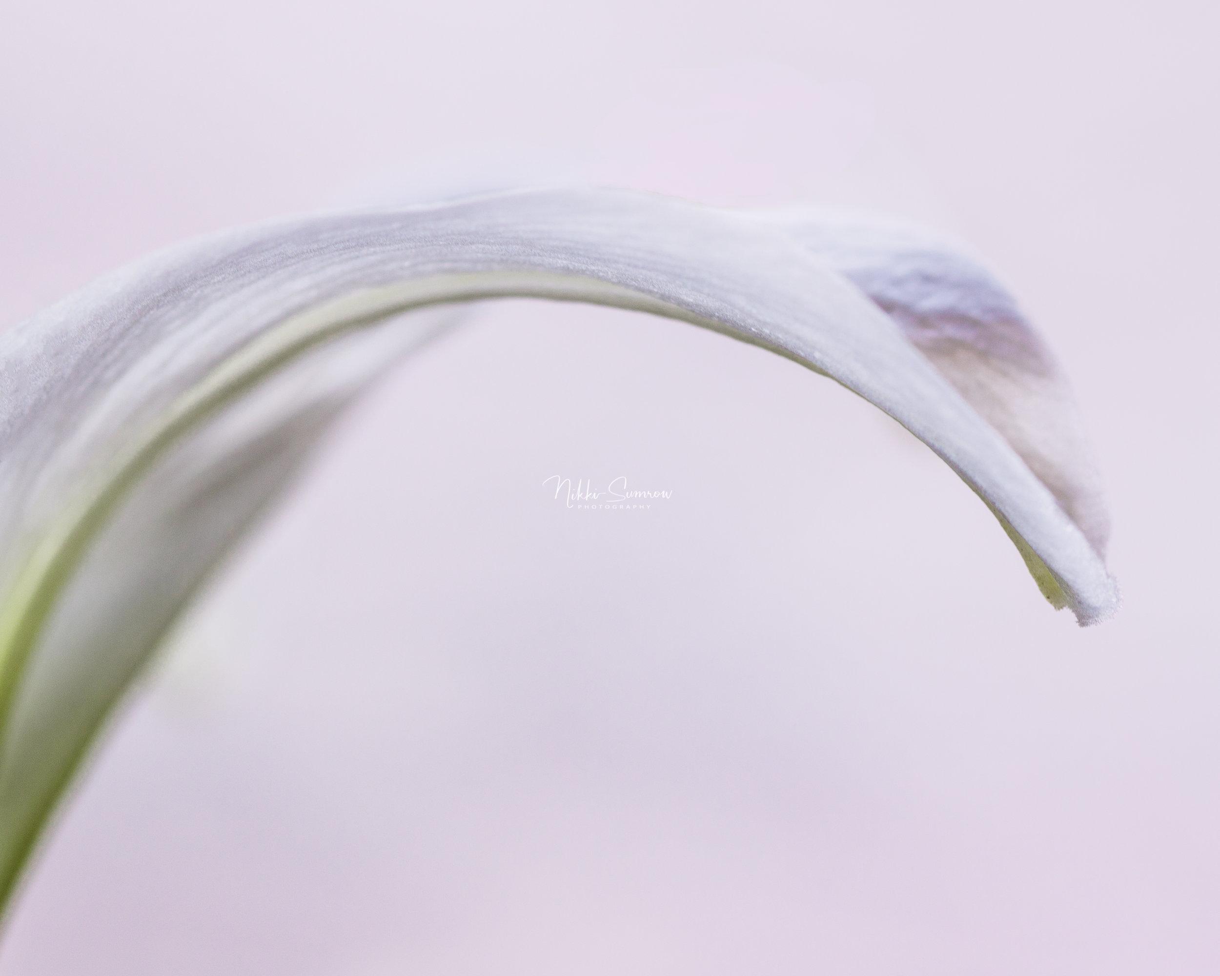 springlily_web.jpg
