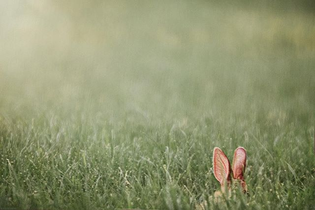 """Somebunny was hiding 😊 . """"If we can teach people about wildlife, they will be touched. Share my wildlife with me. Because humans want to save things that they love."""" ― Steve Irwin . 🦊Welcome to our #wildlife_loop, a collaboration of photographers who share a love and conservation for the wildlife that lives all around us. We promote ethical wildlife photography practices and strive to make the world better for animals. Join us each week as we share some of our favorite animal photos by clicking our tag or by going to the next artist and following our loop! . Next artist is: @loggerhead55 . . . . . #teamcanon #bokeh_addicts  #igbest_macros #macro_freaks  #macroclique #femalenaturephotographycom #fiftyshades_of_macro #macro_moms #tnh_usa _ #macro_mood #bokeh_kings #pretty_shotz #pearlsofbokeh #allkindsofnature #clickinmoms #fotocatchers #bokeh_bliss #everything_imaginable  #InstaNatureFriends_ #bokeh_killers #animal_captures #wildlifephotography #texasthroughherlens #bokeh_and_blur #naturephotographer #nature_of_our_world #texas_ig #wildlife_addicts"""
