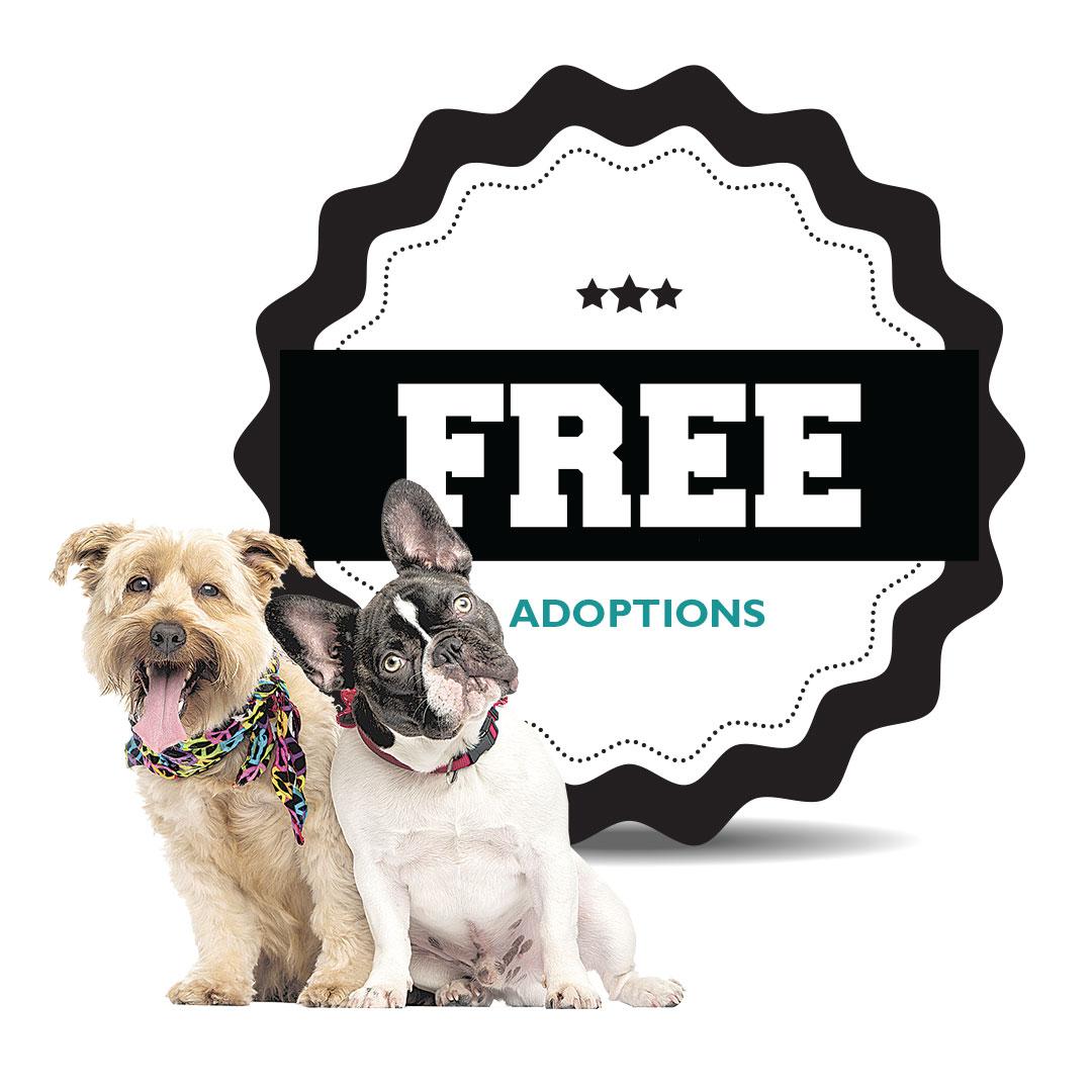 charleston-inside-out-charleston-animal-society-free-adoptions.jpg