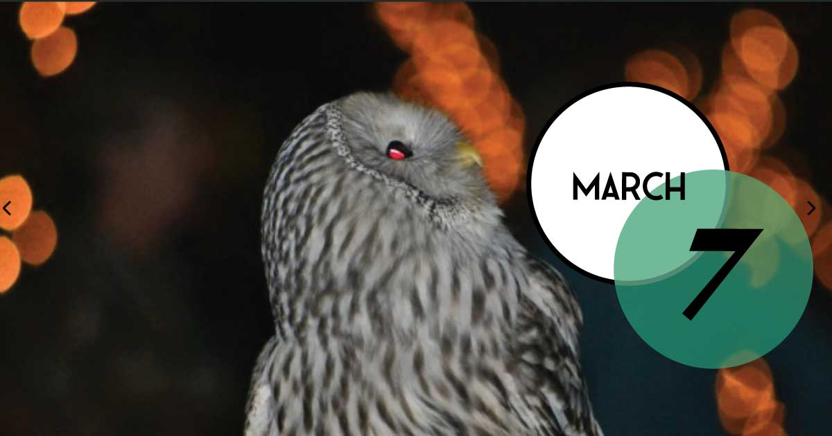 Elegant, night-time program, March 7, at The Center for Birds of Prey, focusing on the mysterious world of owls. Program fee includes a reception with beer, wine, non-alcoholic drinks, and heavy hors-d'oeuvres.