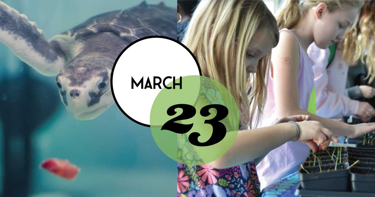Enjoy Spring Break traveling through the mountains to the sea at the South Carolina Aquarium, and stamp your passport to fun as you discover ongoing activities around every corner.
