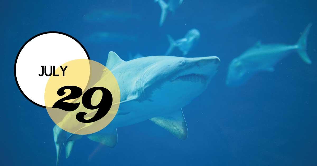 In celebration of Shark Week, join South Carolina Aquarium for Shark Week Trivia Night at the Aquarium on July 29th.