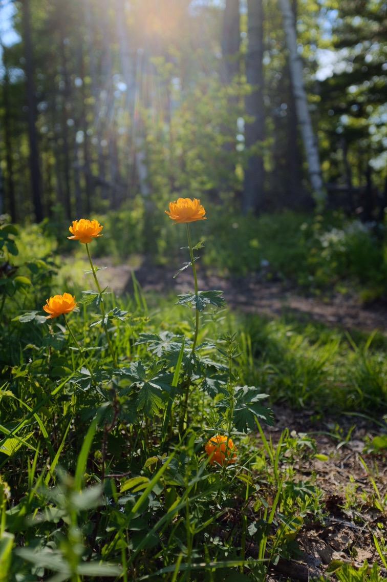 Blumen am Baykal-See