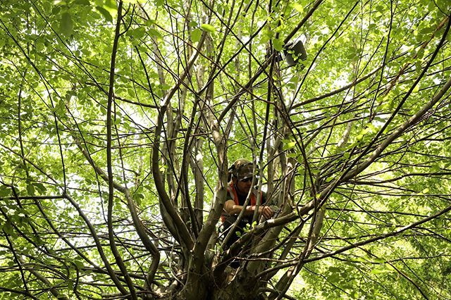 Living Symphonies is coming to Epping Forest this Saturday 20th July! Come and experience a piece of music that grows just like the forest ecosystem that surrounds it. The best word I can use to describe it is magical ✨ Runs until 27th July — www.livingsymphonies.com for location details. @jonesbulley @ideoforms @jjbulley #wfculture19 @wfculture19