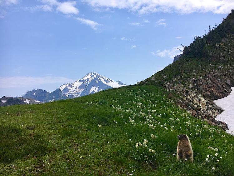 Greetings Dakobed (and posing marmot)!
