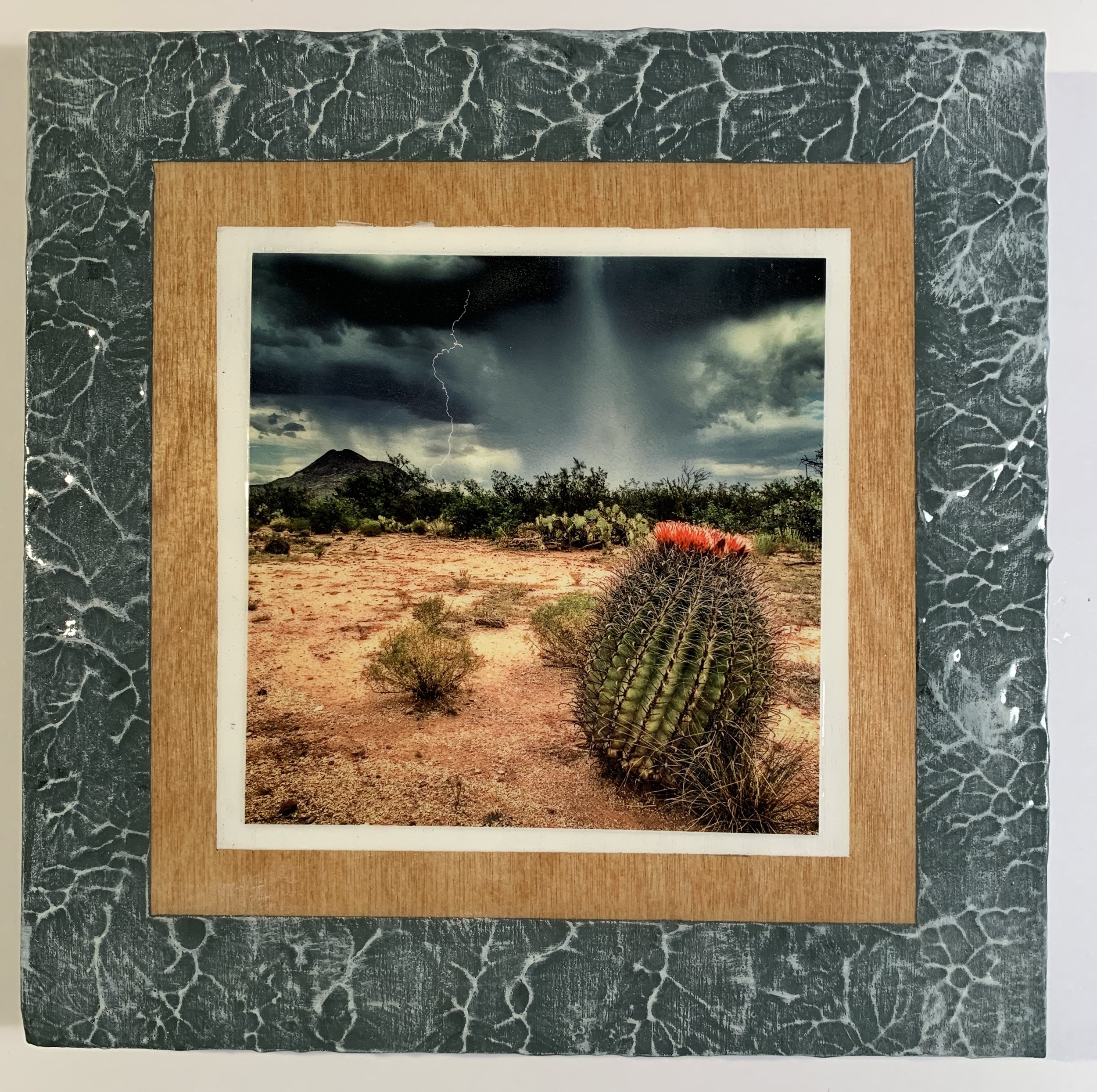 Barrel Cactus 2.JPG