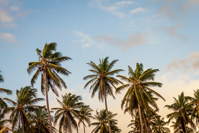 Palm-Trees-California.jpg