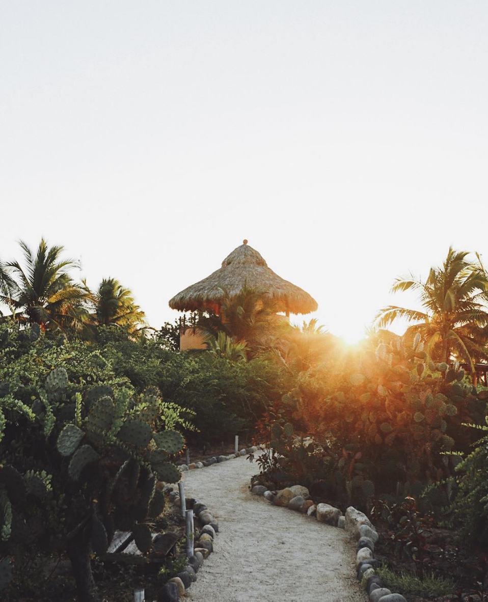 Playa+Viva+Mexico+by+Sam+Griggs-1.png