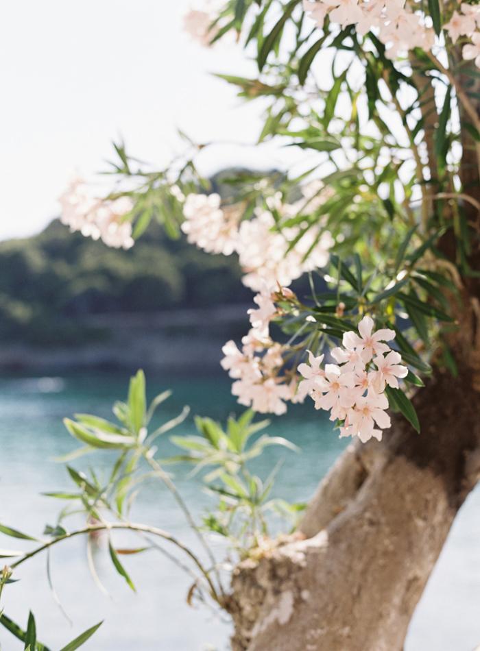 Pink-Flowers-in-Kefalonia-Greece-700x950.jpg
