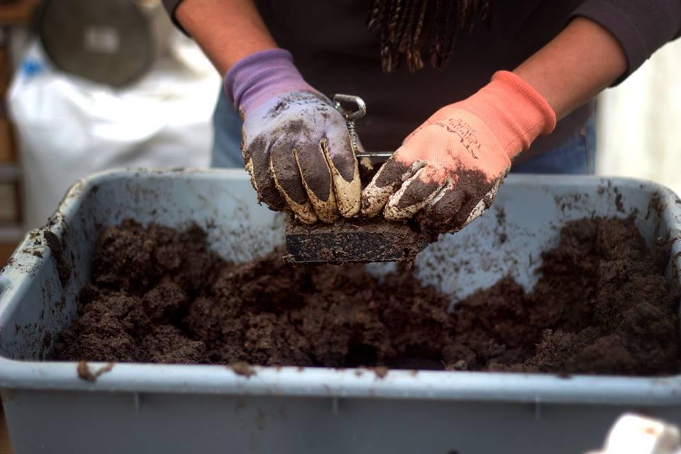 scattered seeds seed blocking.jpg