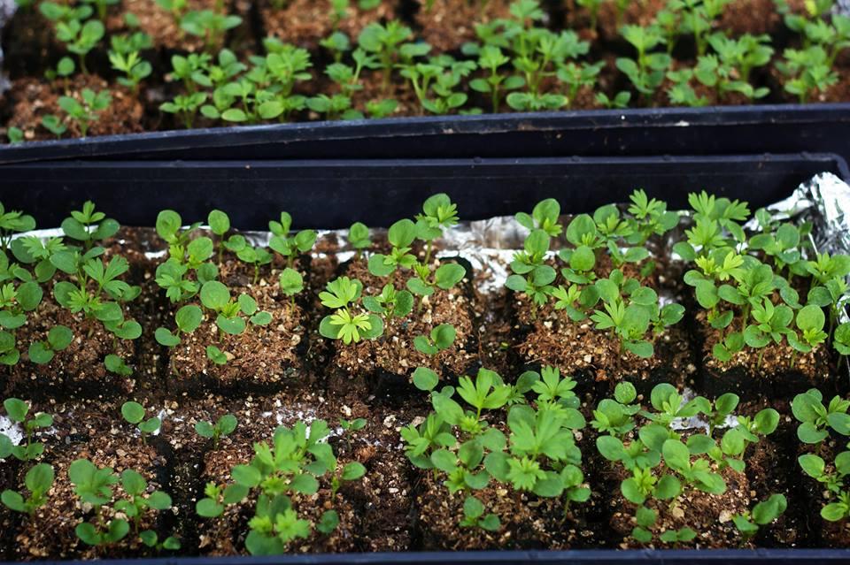 scattered seeds soil block.jpg