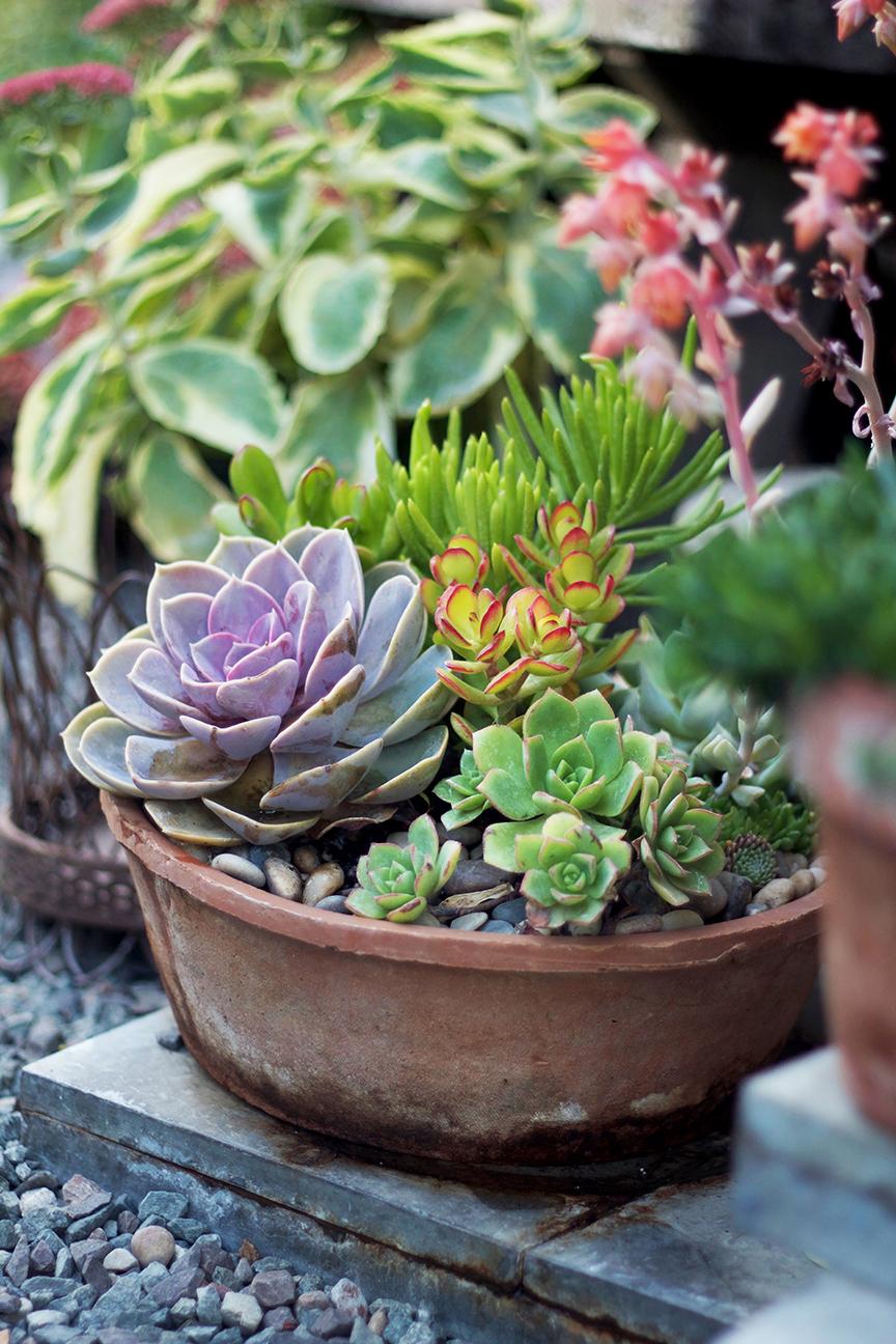 reduced succulent garden container planter pc garden.jpg