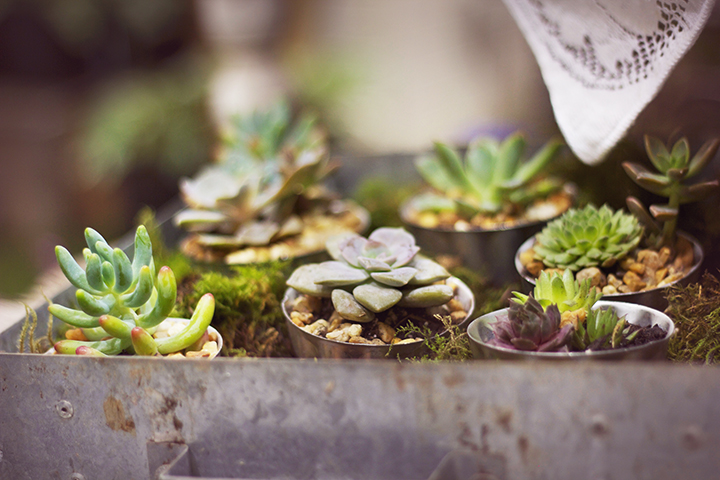 reduced succulent jello molds favor wedding pc ss container garden.jpg